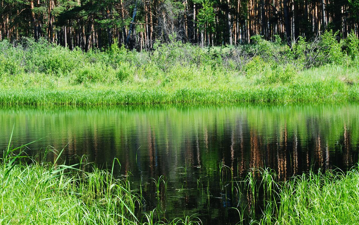 Водоемы вблизи Шадринска