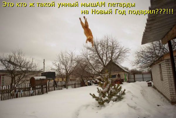 http://sf.uploads.ru/AobEO.jpg