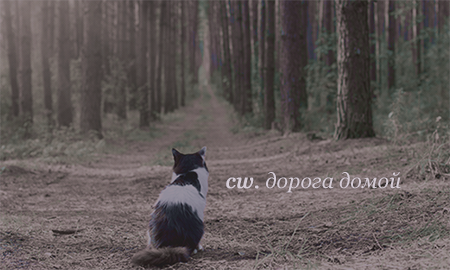 http://sf.uploads.ru/Q8FMG.png