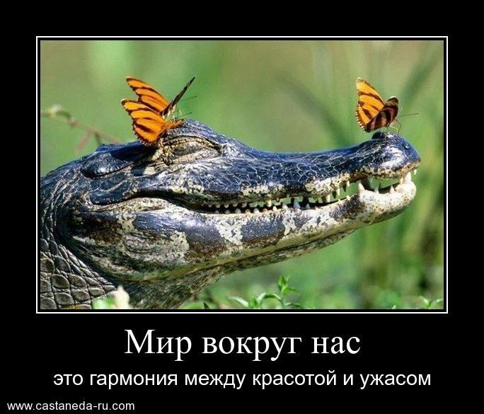 http://sf.uploads.ru/Udytk.jpg