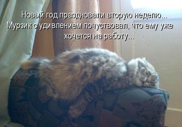 http://sf.uploads.ru/gBWqG.jpg