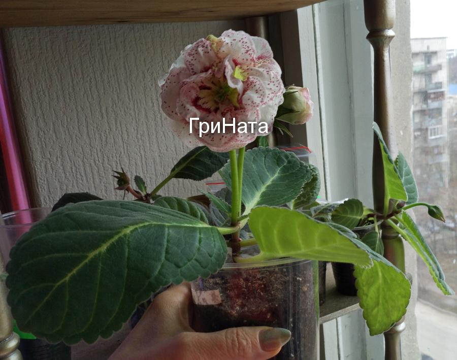 http://sf.uploads.ru/s904f.jpg