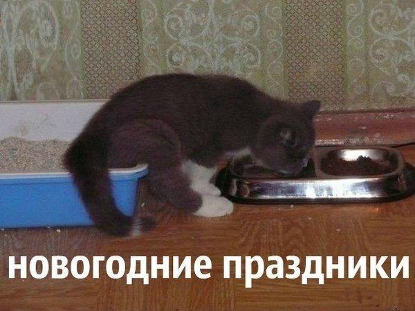 http://sf.uploads.ru/t/0tV8e.jpg