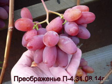 http://sf.uploads.ru/t/1TvXA.jpg
