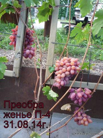 http://sf.uploads.ru/t/4IDyU.jpg