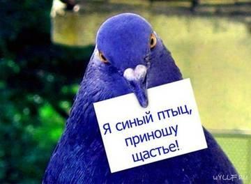 http://sf.uploads.ru/t/4pEmu.jpg