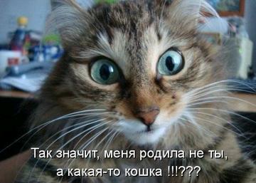 http://sf.uploads.ru/t/5SdWw.png