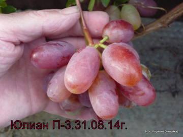http://sf.uploads.ru/t/8mBdl.jpg