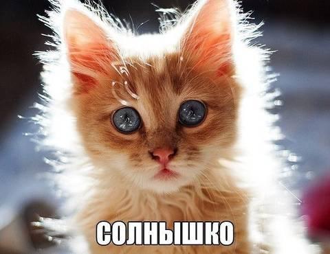 http://sf.uploads.ru/t/9Ur4m.jpg