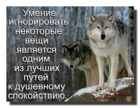 http://sf.uploads.ru/t/Avsno.jpg