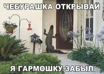 http://sf.uploads.ru/t/Fao8X.jpg