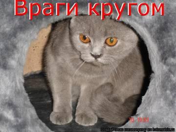 http://sf.uploads.ru/t/FkBK9.jpg