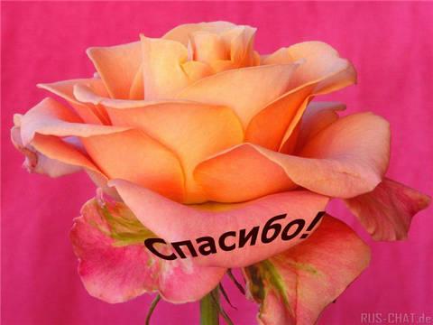 http://sf.uploads.ru/t/HuCK9.jpg