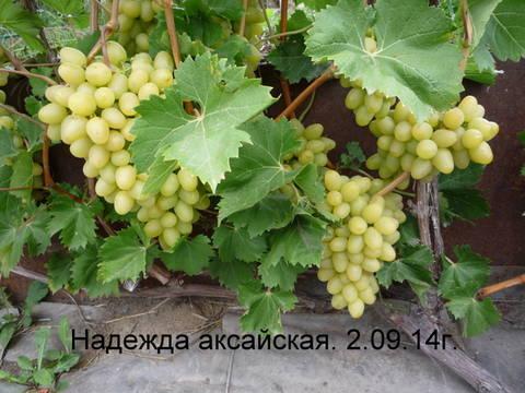 http://sf.uploads.ru/t/I3cqf.jpg