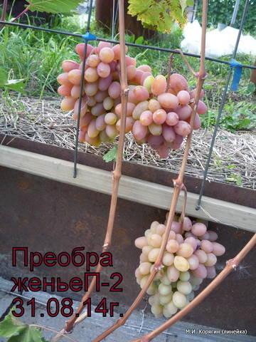http://sf.uploads.ru/t/Jvj4s.jpg