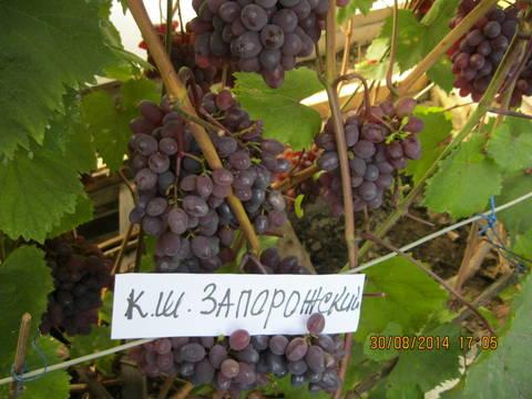 http://sf.uploads.ru/t/KAYGu.jpg