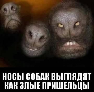 http://sf.uploads.ru/t/KBPGf.jpg