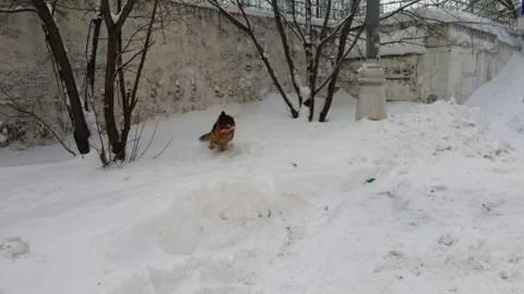 http://sf.uploads.ru/t/KDwxl.jpg