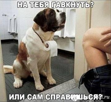 http://sf.uploads.ru/t/L74Ni.jpg