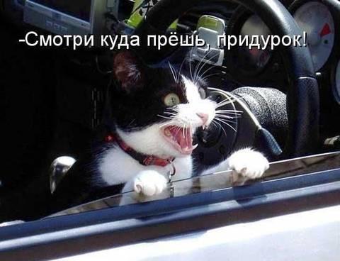 http://sf.uploads.ru/t/MpaVQ.jpg