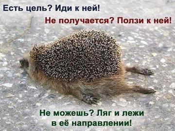 http://sf.uploads.ru/t/NcQel.jpg