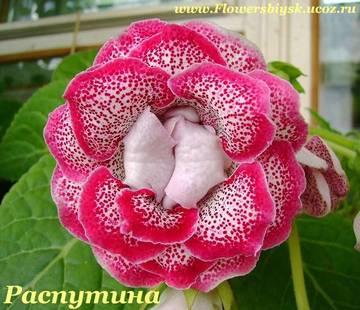 http://sf.uploads.ru/t/R1xtu.jpg