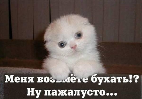 http://sf.uploads.ru/t/RidC1.jpg