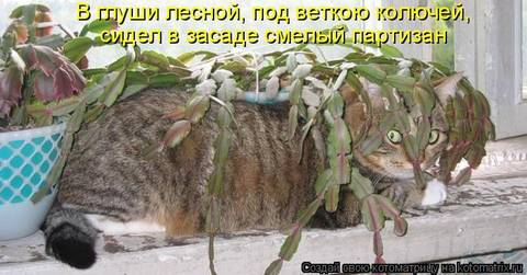 http://sf.uploads.ru/t/U9Sek.jpg