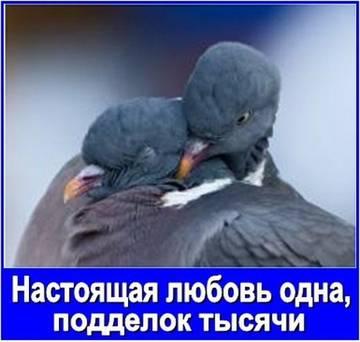http://sf.uploads.ru/t/Uu8bQ.jpg
