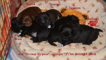 http://sf.uploads.ru/t/VYnOG.jpg