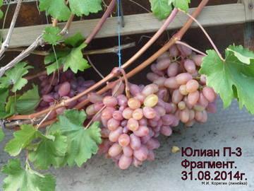 http://sf.uploads.ru/t/WVUi6.jpg