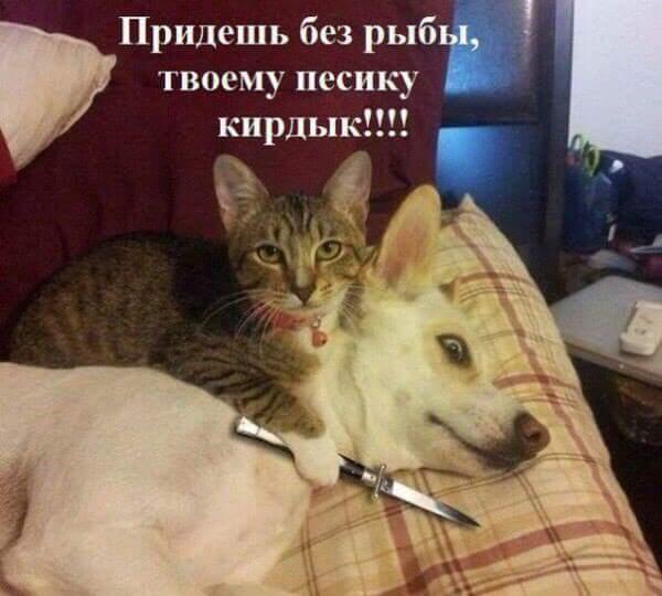 http://sf.uploads.ru/t/ZrfQm.jpg
