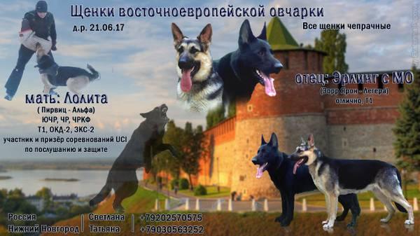 http://sf.uploads.ru/t/iZIAT.jpg