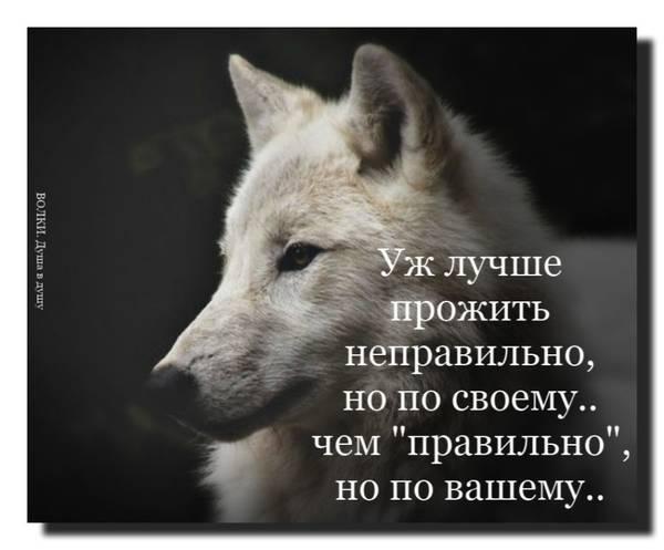 http://sf.uploads.ru/t/t8Cgr.jpg