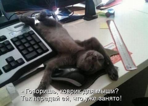 http://sf.uploads.ru/t/tnQ2v.jpg
