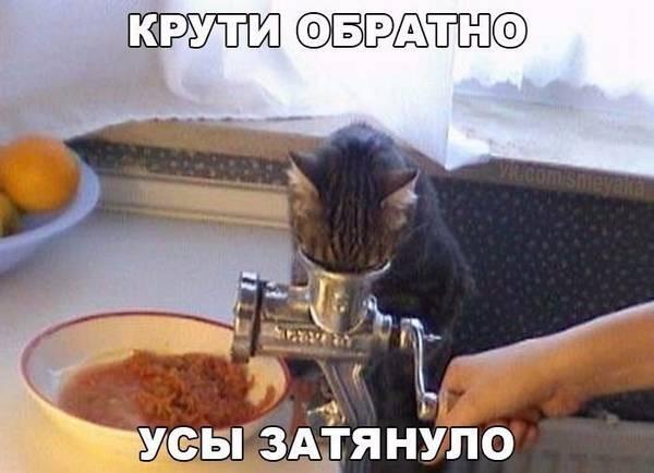 http://sf.uploads.ru/t/tp8b1.jpg