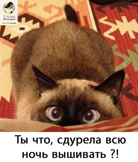http://sf.uploads.ru/t/uOrUF.jpg