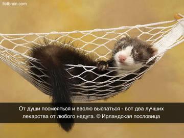 http://sf.uploads.ru/t/v7O9Y.jpg