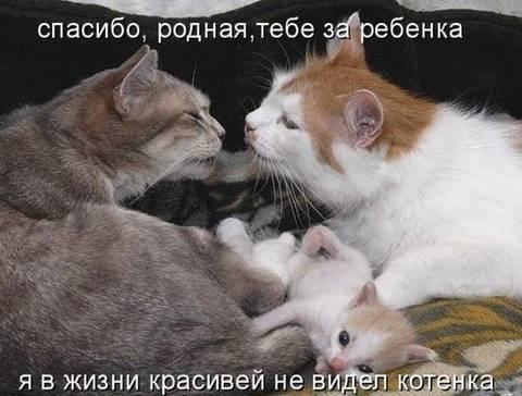 http://sf.uploads.ru/t/vNJ5y.jpg