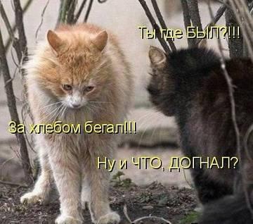 http://sf.uploads.ru/t/wLQn6.jpg