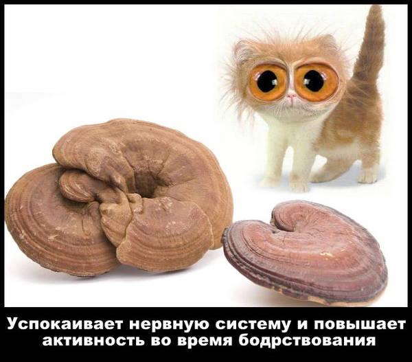 http://sf.uploads.ru/t/xMyog.jpg