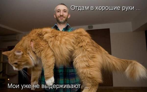 http://sf.uploads.ru/t/z2GwO.jpg
