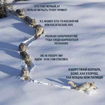 http://sf.uploads.ru/t/zJiSV.jpg
