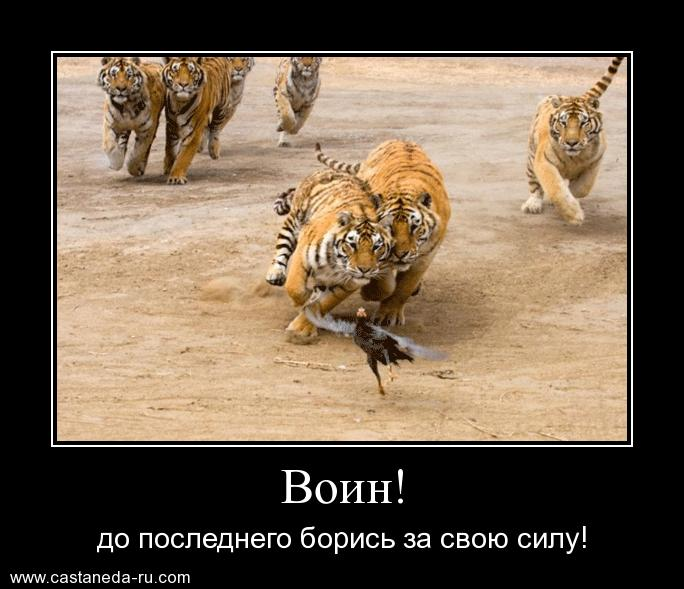 http://sf.uploads.ru/9q8wB.jpg
