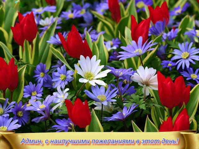 http://sf.uploads.ru/Q8eEM.jpg