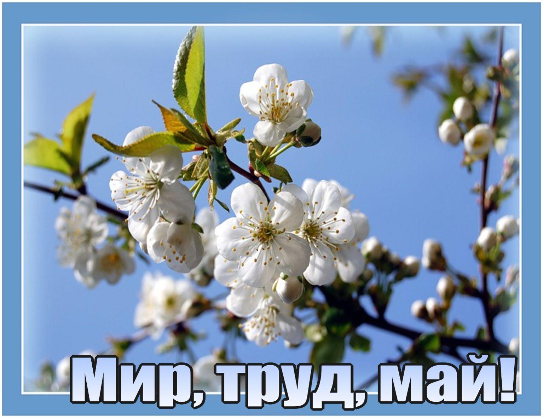 http://sf.uploads.ru/moE4p.jpg
