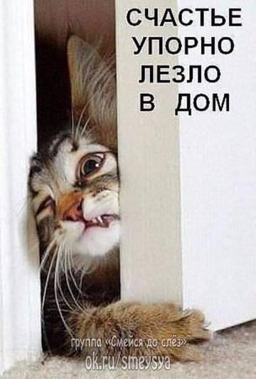 http://sf.uploads.ru/t/Uijwm.jpg