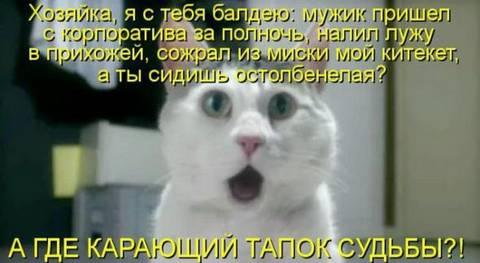 http://sf.uploads.ru/t/hJanl.jpg