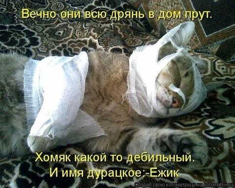http://sf.uploads.ru/t/jFu8m.jpg