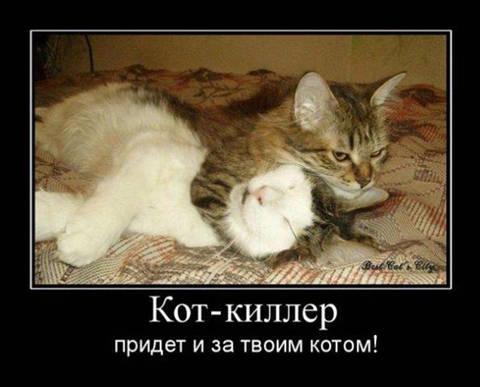 http://sf.uploads.ru/t/rZajP.jpg